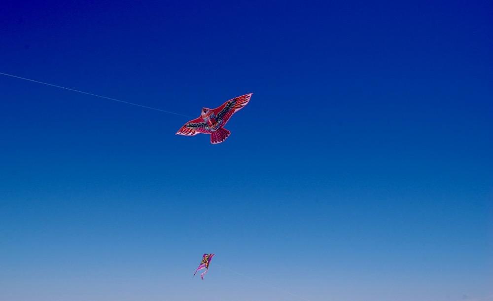 Classy colibri at Plage Maison Bianca Beach Club, Pampelonne, Saint-Tropez, Ramatuelle, France